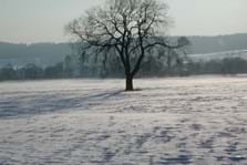 Winter in der Aue